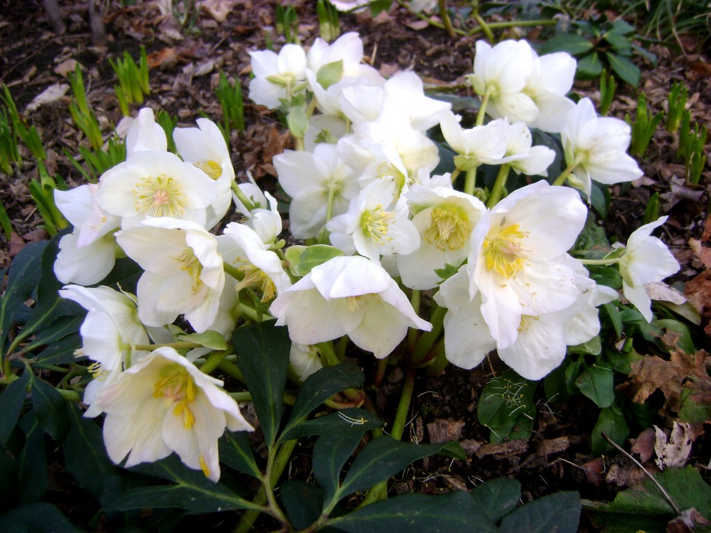 gardenapril11-076